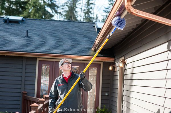 our exterminator in north bend sweeping for spiders