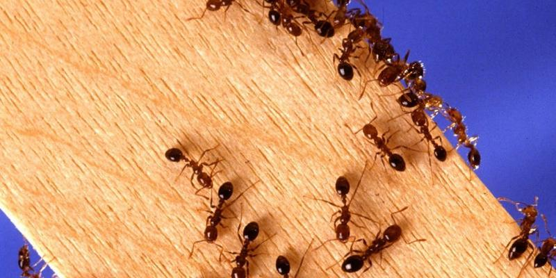 6 Common Signs Of Carpenter Ants Infestation Carpenter Ant Removal